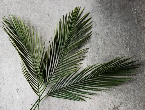 Bøn til palmesøndag